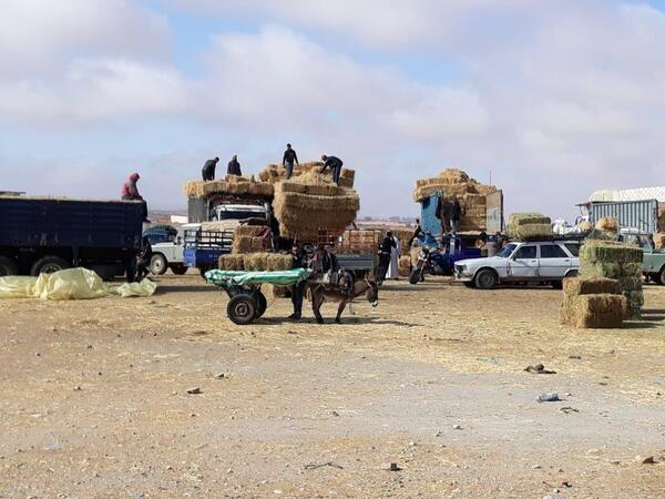 Camions chargés de balle de paille