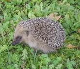 Blog de charlottopoire :Charlottopoire... mes petites créas..., Un petit visiteur dans mon jardin