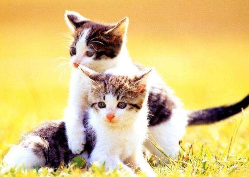 tendresse animale (prendre un animal c'est pour le rendre heureux)