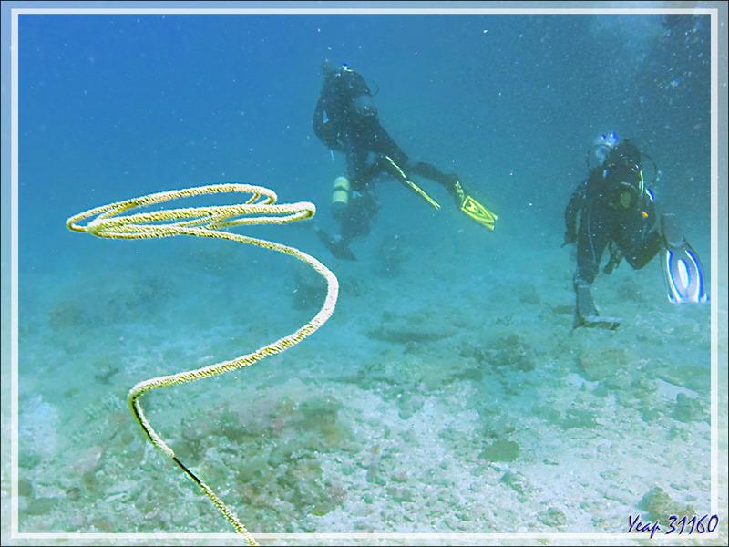 "Corail ""Fil de fer"", Black sea whip, Black wire coral (Stichopathes lutkeni) et mes compagnons de palanquée - Spot Betalinjona - Nosy Tsarabanjina - Archipel Mitsio - Madagascar"