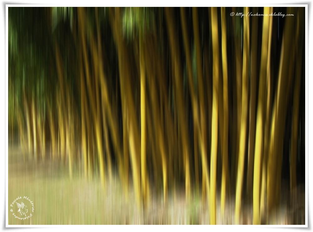 Filé sur les bambous...