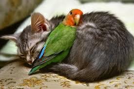 Blog de roselyne : Humanité, Nature, Amour et lumière, Relations animales