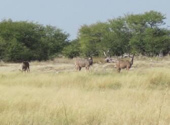 Namibie mai 2017