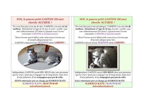 SOS POUR 33 CHATS ENTASSES DANS UN APPARTEMENT PARISIEN !!!