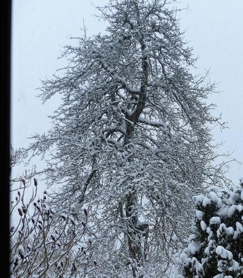 février eeeeeeet enfin un peu de neige pour marquer l'hiver