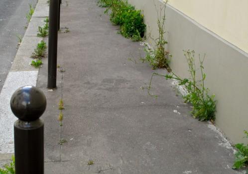 herbe-rue-St-Sabin-11e-0350.jpg
