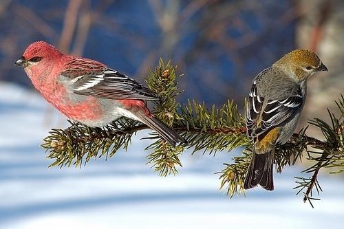 Pourquoi nourrir les oiseaux durant les grands froids ?