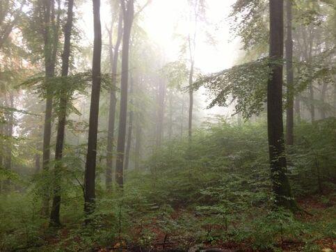 La forêt de Hummel en Allemagne