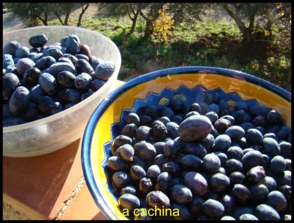 olives noires (29)