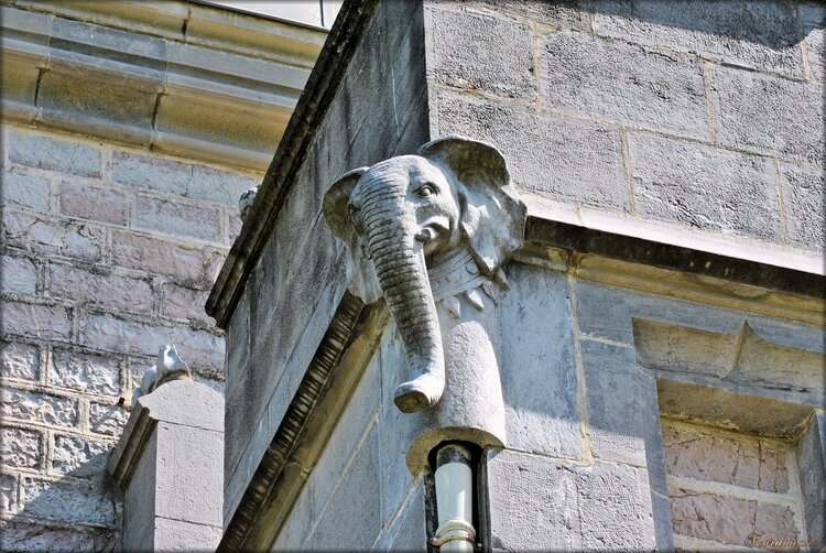 Photo du bestiaire du château Abbadia (L'éléphant)
