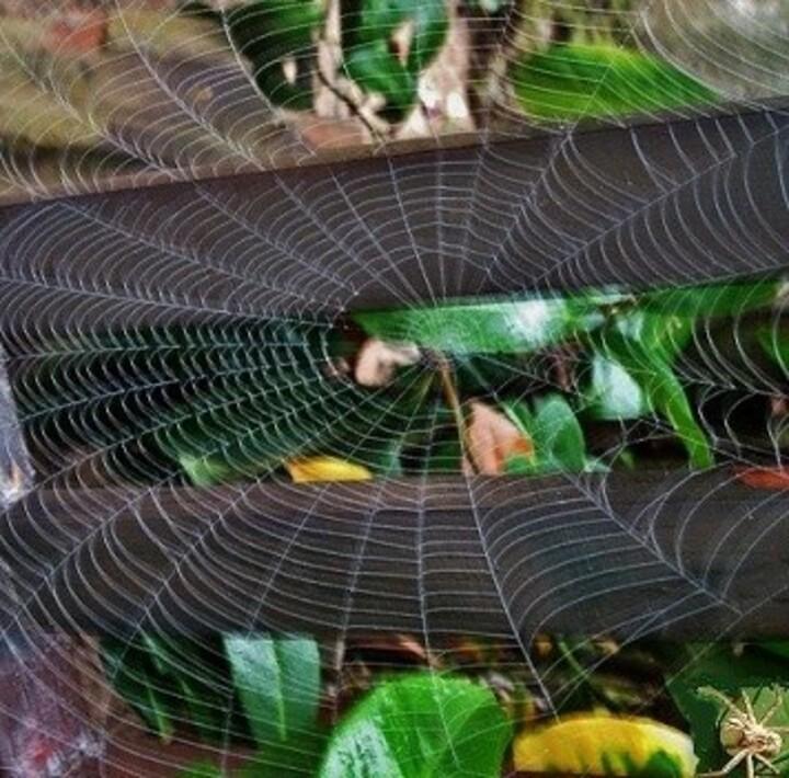 La toile d'araignée, à la recherche de ses secrets …......