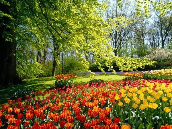 fleurs-h.jpg