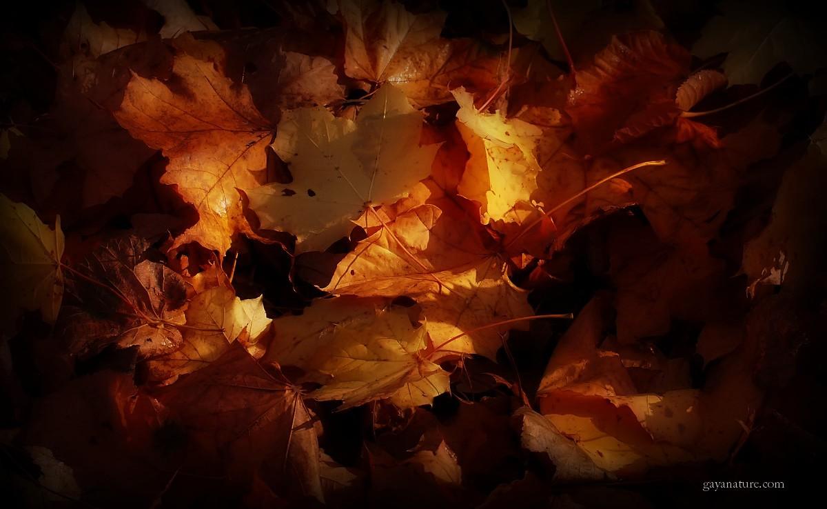 Au revoir l'automne