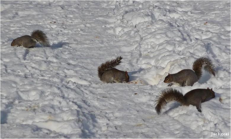 Ecureuils et toutous