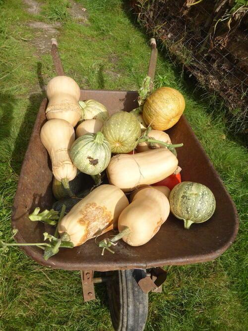 - Nouvelles de mon jardin à la veille de l'automne -