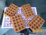 Gaufres moelleuses au chocolat