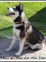 Maïko (13 mois), lors d'une visite à l'élevage