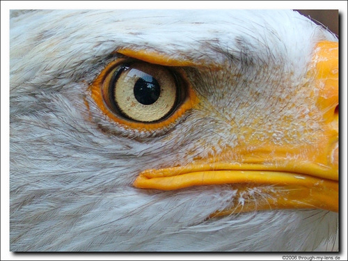 AUSTRALIA - The Eagle Eye