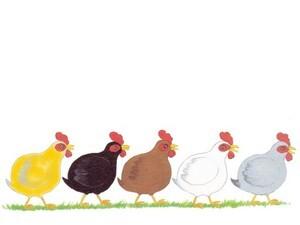 5-poulettes.jpg