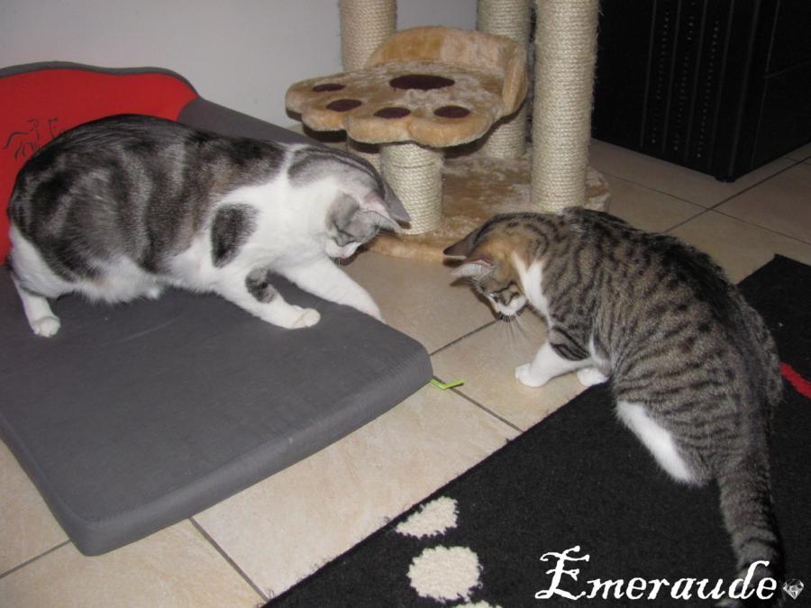 Mes chats ne sont plus là mais resteront dans mon coeur