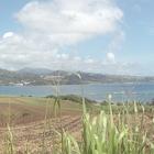 La Batterie, Presqu'Île de la Caravelle, après la coupe - Photo : Dru