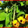 PLANTES ANNUELLES 2010 468.jpg