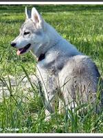 Jaïa (4 mois)