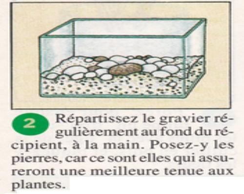 Amaryllis sur gravier