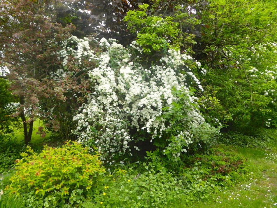 Le blanc, la pureté, nos fleurs blanches!