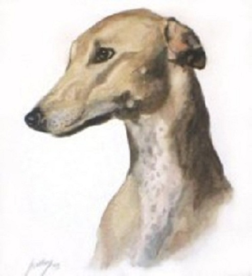 L' Art et le  Greyhound .