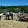 les chevaux moissonnent.JPG