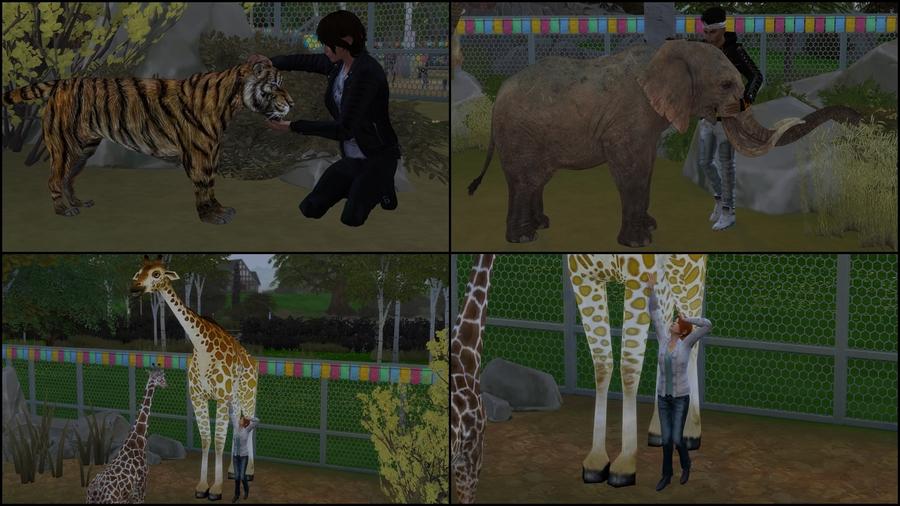 Pose 1 (zoo)