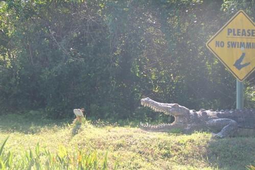 Everglades 2358