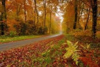 ~~ Les soleils d'octobre ~~ d' A. Lacaussade.