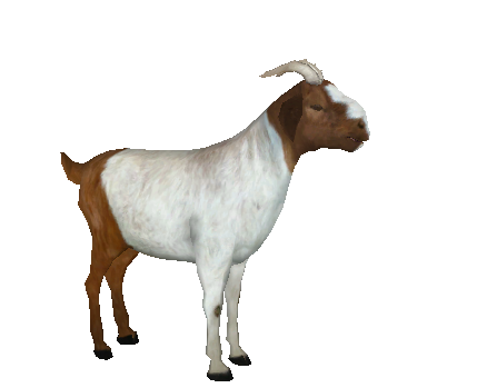 File:GoatBoer1.png