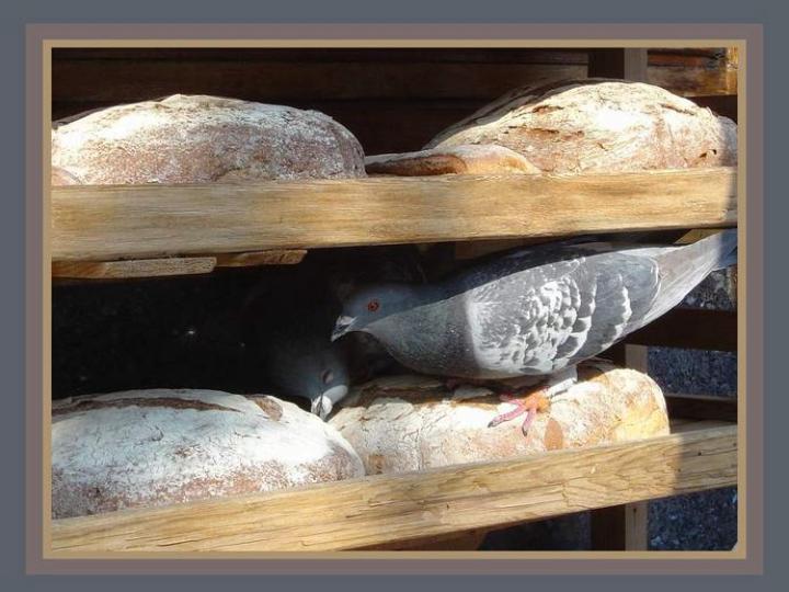 """Le pain ... """"pas perdu"""" ..."""