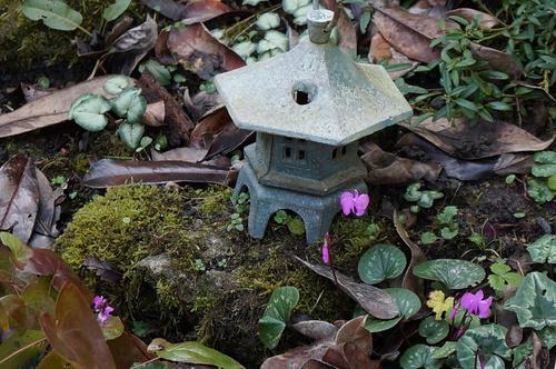 Un jardin qui mousse