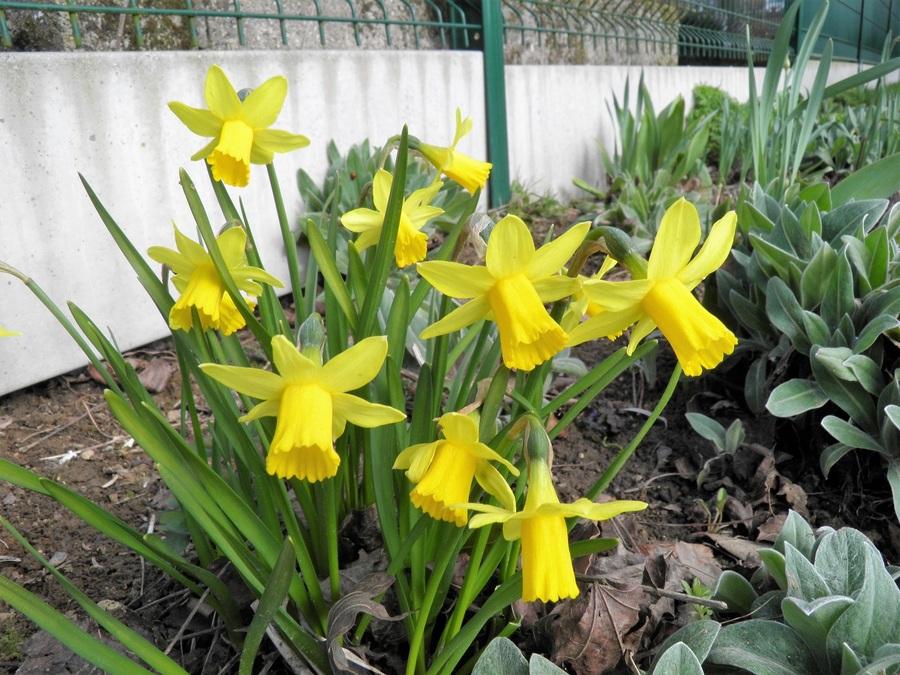 Le printemps est arrivé dans mon jardin