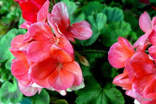 Voilà de belles fleurs !
