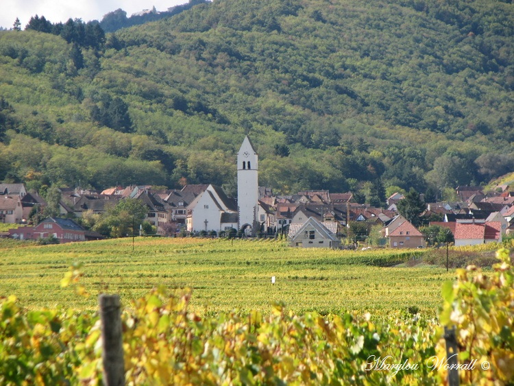 Le vignoble se vêt d'or