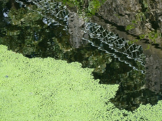 Plan d'eau de Metz - 20