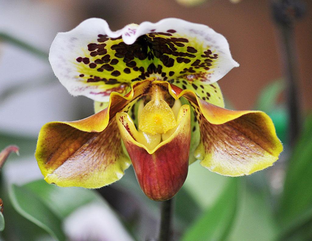 Exposition d'orchidées à Annequin (11)