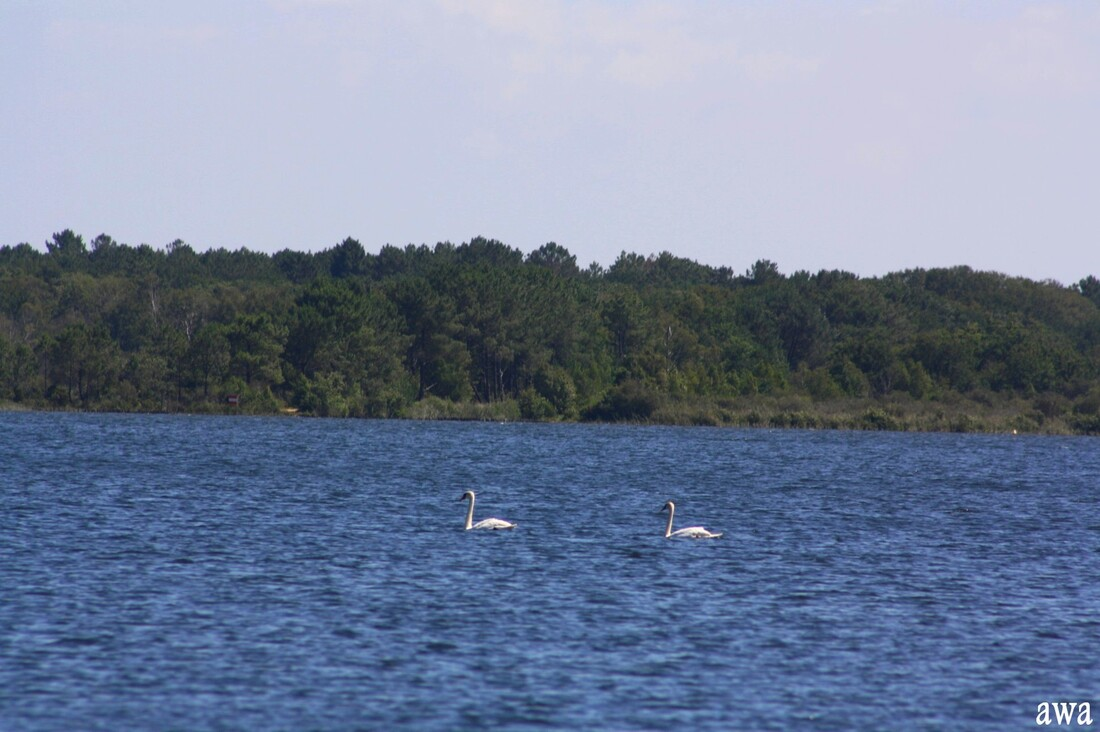 Balade sur le lac de Lacanau
