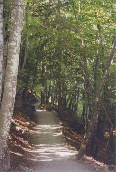 SAINTS (Yonne) : les jours heureux