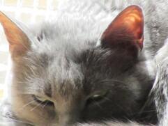 Coucou du haïku : L'été des animaux de compagnie