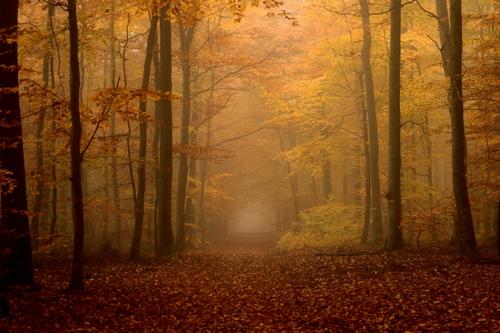 Aux jours d'automne