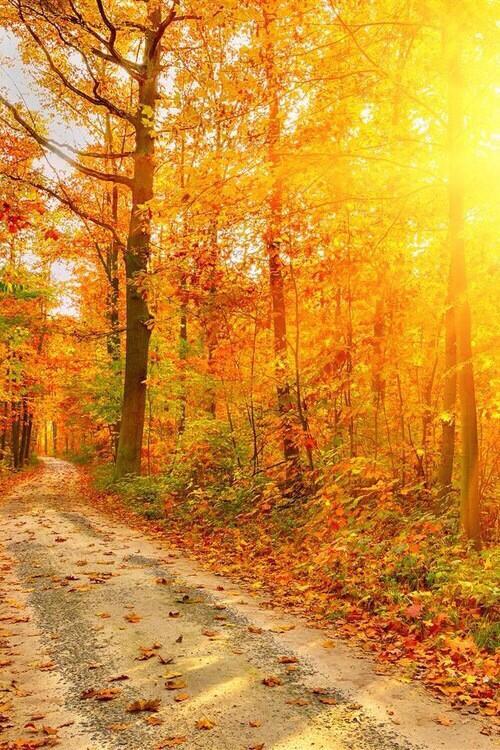 Aujourd'hui c'est l'automne !