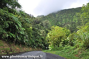 foret-tropicale01