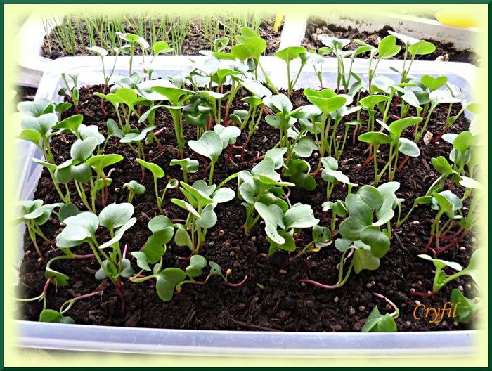 Quelques semis
