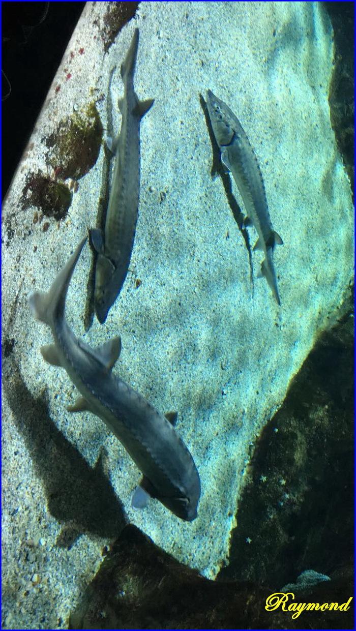 Aquarium de la rochelle.4